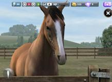 My Horse Screenshot